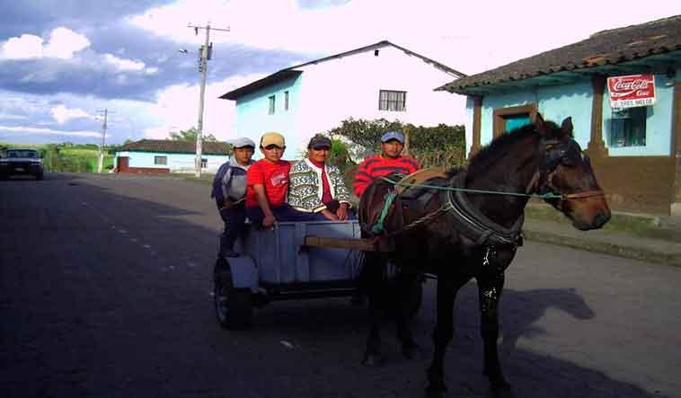 Transporte-Lechero